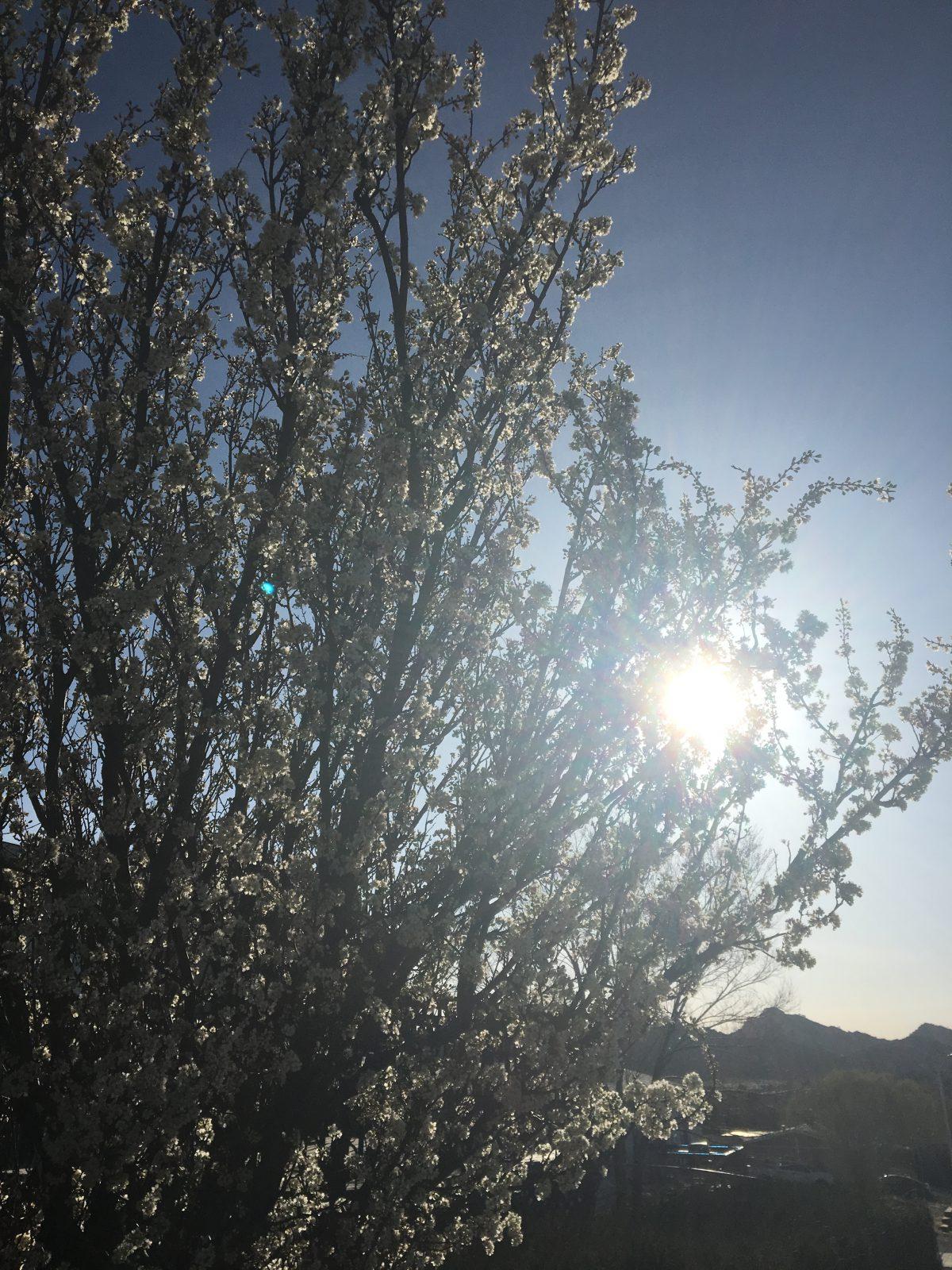 春、これから石の季節!
